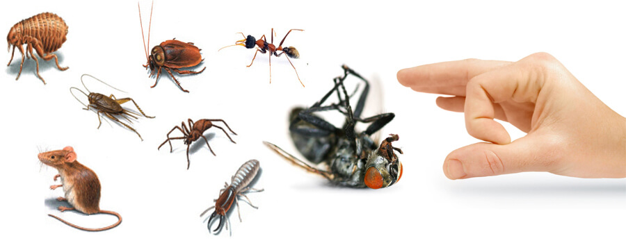 شركة رش مبيدات بالخرج 0565251944